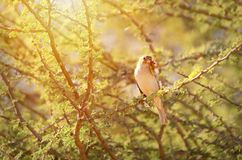 De vogel ving een insect stock foto's