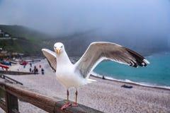 De vogel wil door de wind vliegen stock afbeeldingen