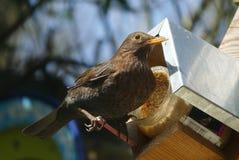 De vogel zit dichtbij haar huis in de zomerdag stock foto