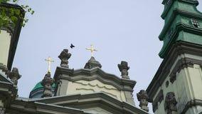De vogel zit op de koepel van de kerk stock footage