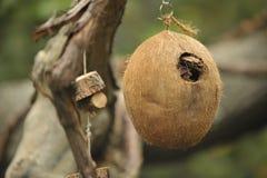 De vogelhuis van de kokosnoot stock afbeelding
