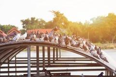 De vogels royalty-vrije stock foto