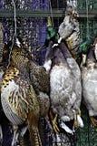 De vogels die van het spel bij een slagerij hangen Stock Foto's