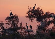 De vogels in het nest op de boom Royalty-vrije Stock Afbeeldingen
