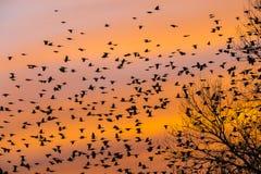 De vogels leiden huis op een zuidelijke zonsondergang stock foto's