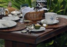De vogels op de lijst eten omhoog het ochtendontbijt royalty-vrije stock afbeeldingen