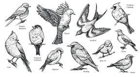 De vogels overhandigen getrokken vectorillustratie Royalty-vrije Stock Afbeelding