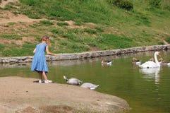 De Vogels van de kindervoeding Stock Foto's