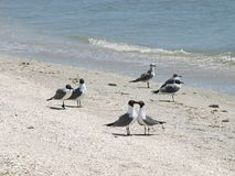 Liefdevogels Stock Foto