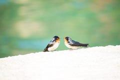 De Vogels van de liefde stock foto
