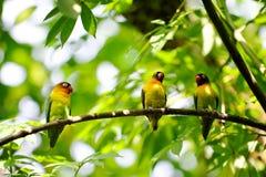 De vogels van de liefde op een boomtak die worden neergestreken Royalty-vrije Stock Afbeelding