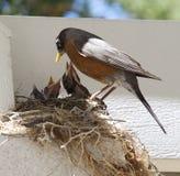 De Vogels van de moeder en van de Baby Royalty-vrije Stock Afbeelding