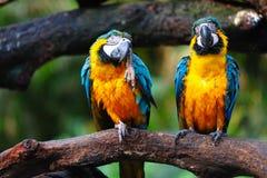De vogels van de papegaai royalty-vrije stock foto's