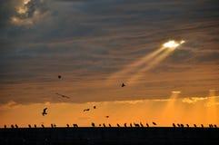 De vogels van de zonsonderganghemel Stock Fotografie