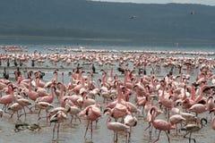 De vogels van duizenden Stock Afbeeldingen