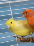 De Vogels van het huisdier stock fotografie