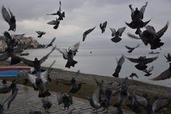 De vogels van massa'sduiven het vliegen Royalty-vrije Stock Foto
