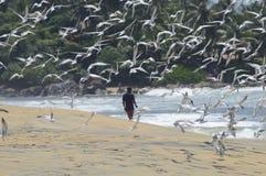 De Vogels van Srilankan op Strand Stock Afbeeldingen