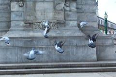 De vogels vliegen hoog stock foto's