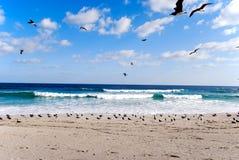 De vogels vliegen over het overzees Stock Afbeeldingen