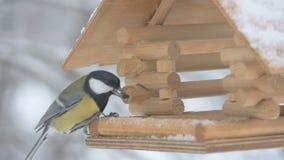 De vogels vliegen tot de voeder en nemen de korrel en vliegen, macrofotografie, sneeuwvlokken die op het vogelhuis vallen stock video