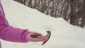 De vogels in vrouwen` s hand eten zaden stock videobeelden