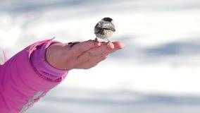 De vogels in vrouwen` s hand eten zaden stock footage
