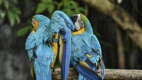 De vogels zijn beperkt in de dierentuin Vogels die vrijheid niet hebben in de wildernis te leven royalty-vrije stock afbeeldingen