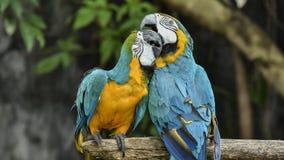 De vogels zijn beperkt in de dierentuin Vogels die vrijheid niet hebben in de wildernis te leven stock afbeelding