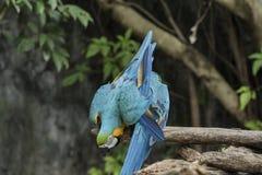 De vogels zijn beperkt in de dierentuin Vogels die vrijheid niet hebben in de wildernis te leven stock afbeeldingen