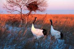 De vogels zingen Royalty-vrije Stock Foto