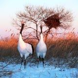 De vogels zingen Royalty-vrije Stock Foto's