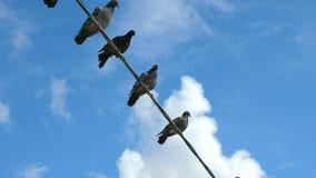 De vogels zitten op de draad stock video