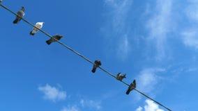 De vogels zitten op de draad stock footage