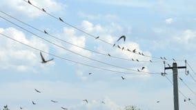 De vogels zitten op draden en vliegen weg stock footage