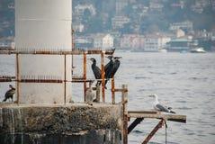 De vogels zitten op de sporen van een overzeese boei, tegen de achtergrond van het overzees en de kust royalty-vrije stock foto