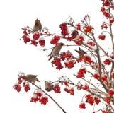 De vogels zitten op takken Stock Fotografie