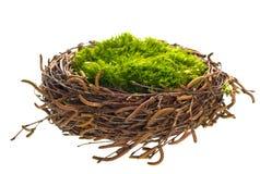 De vogelsnest van de aard met groen gras Royalty-vrije Stock Afbeelding