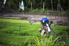 De vogelverschrikker dient de rijstlandbouwers stock foto