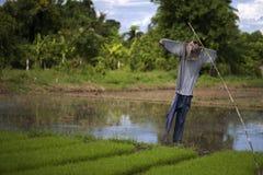 De vogelverschrikker dient de rijstlandbouwers stock afbeeldingen