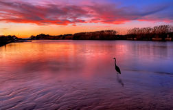 De vogelwaarnemings zonsondergang stock foto