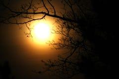 De volle maan tussen bomen bij nacht Royalty-vrije Stock Foto's