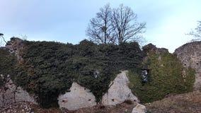 De volledig overwoekerde ruïnes van de kasteelmuur stock foto