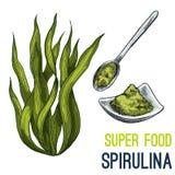 De volledige getrokken schets van het kleuren super voedsel hand Stock Foto's