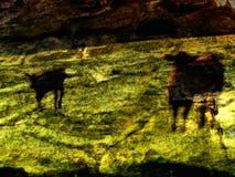 De volta ao Prehistory Fotos de Stock Royalty Free