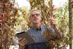 De volwassen tuinman inspecteert zaailingen op een landbouwbedrijf De handen die de tablet houden In de glazen, een baard, die ov royalty-vrije stock foto's