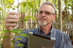 De volwassen tuinman in de tuinwinkel inspecteert installaties In de glazen, een baard, die overall dragen stock foto's