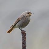 De volwassen wilde vogel fotografeerde dicht Royalty-vrije Stock Fotografie