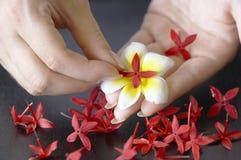 De voorbereiding van bloemen royalty-vrije stock foto
