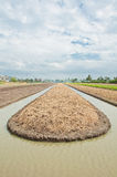 De voorbereidingsland van de grond voor plantaardige cultuur Stock Afbeeldingen